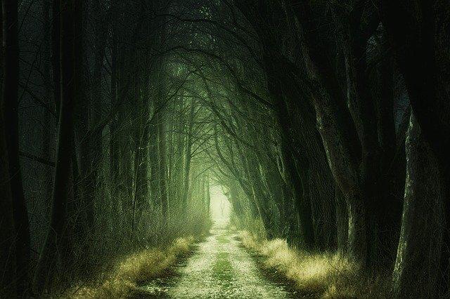 暗い森の道